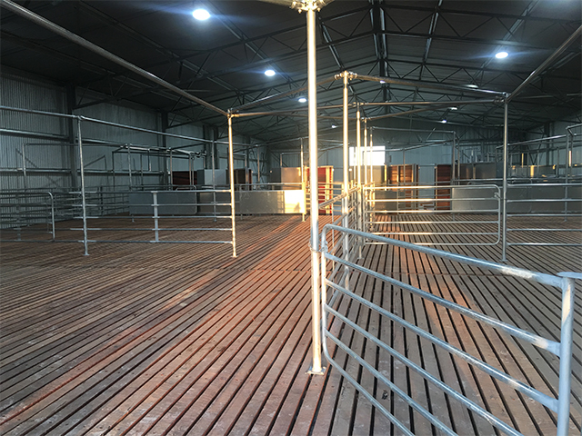 shearing shed 5