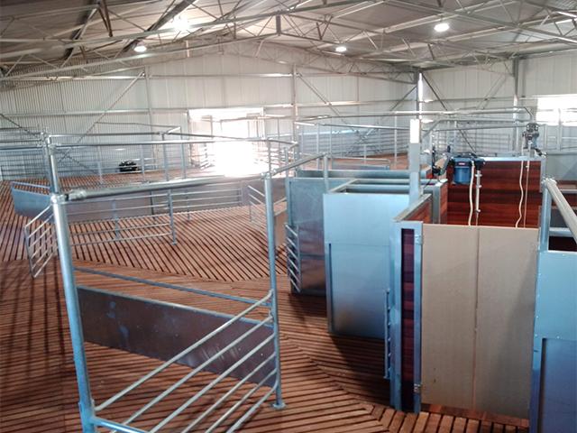 shearing shed 8